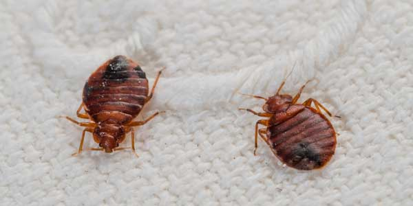 bedbugs asbury park nj