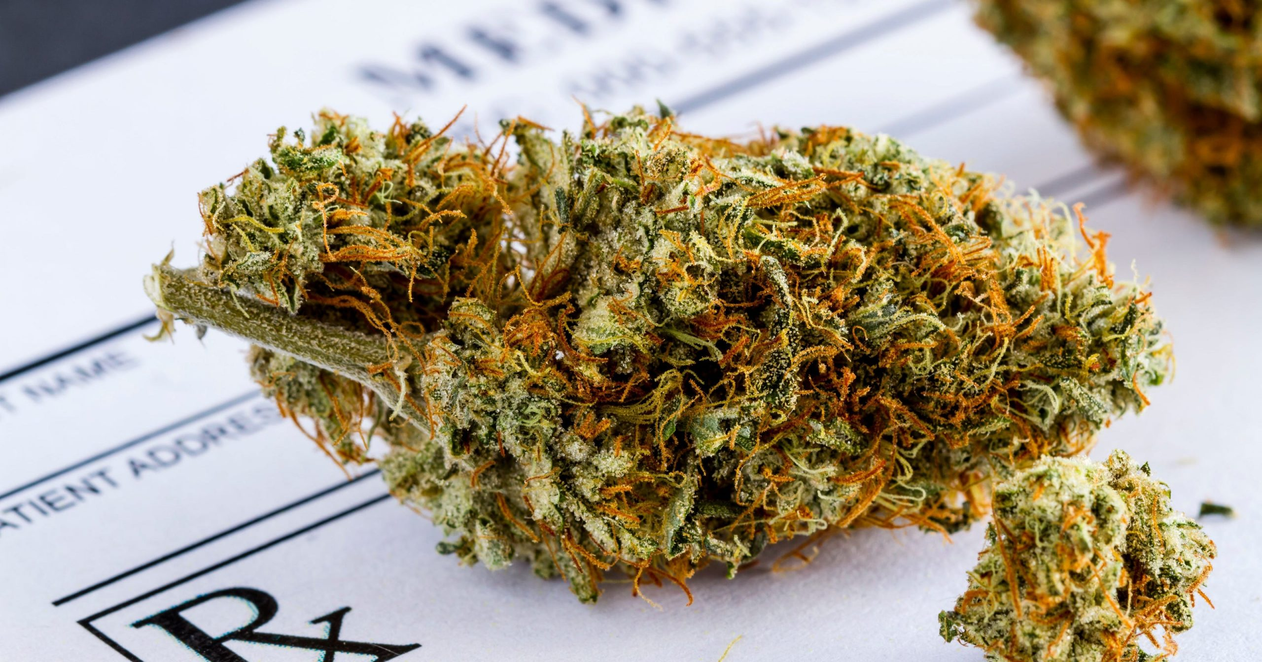 Main types of marijuana you should know about